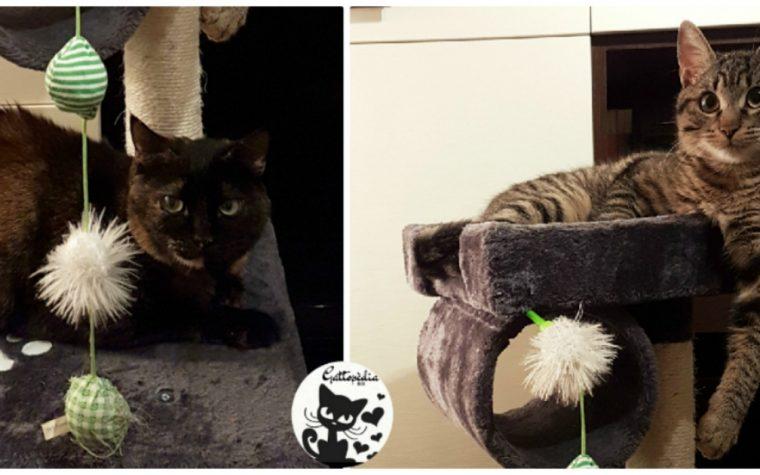 Come nasce Gattopedia, il blog sul gatto