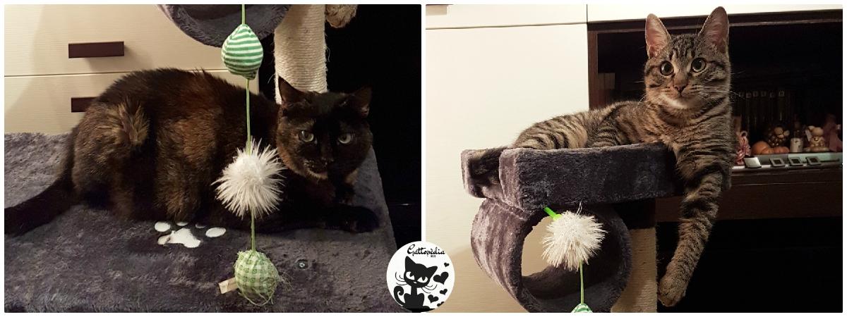 Come nasce Gattopedia - il blog sul gatto