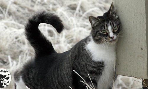 Perché i gatti si strusciano sulle cose, sugli oggetti o sui muri ?