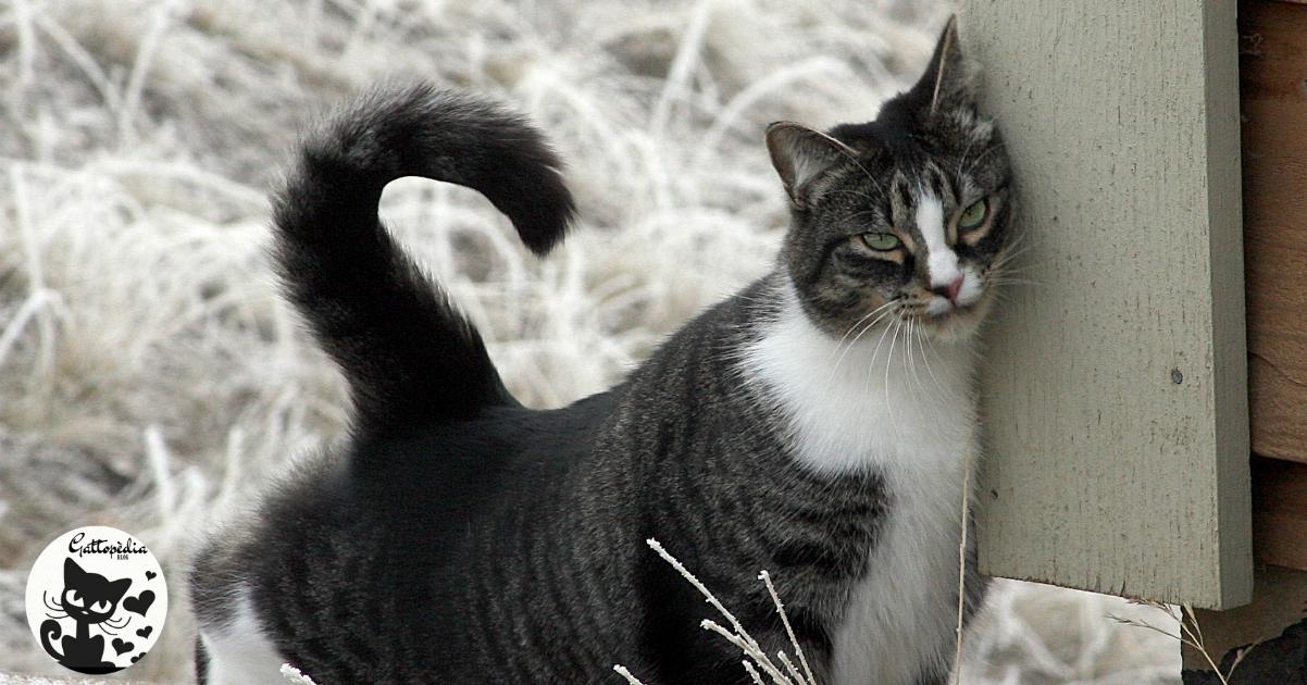 Perché i gatti si strusciano sulle cose, sugli oggetti o sui muri ? Gattopedia Blog Strofinamento del gatto Comportamento del gatto